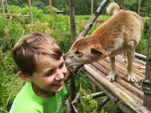 Young boy with dingo