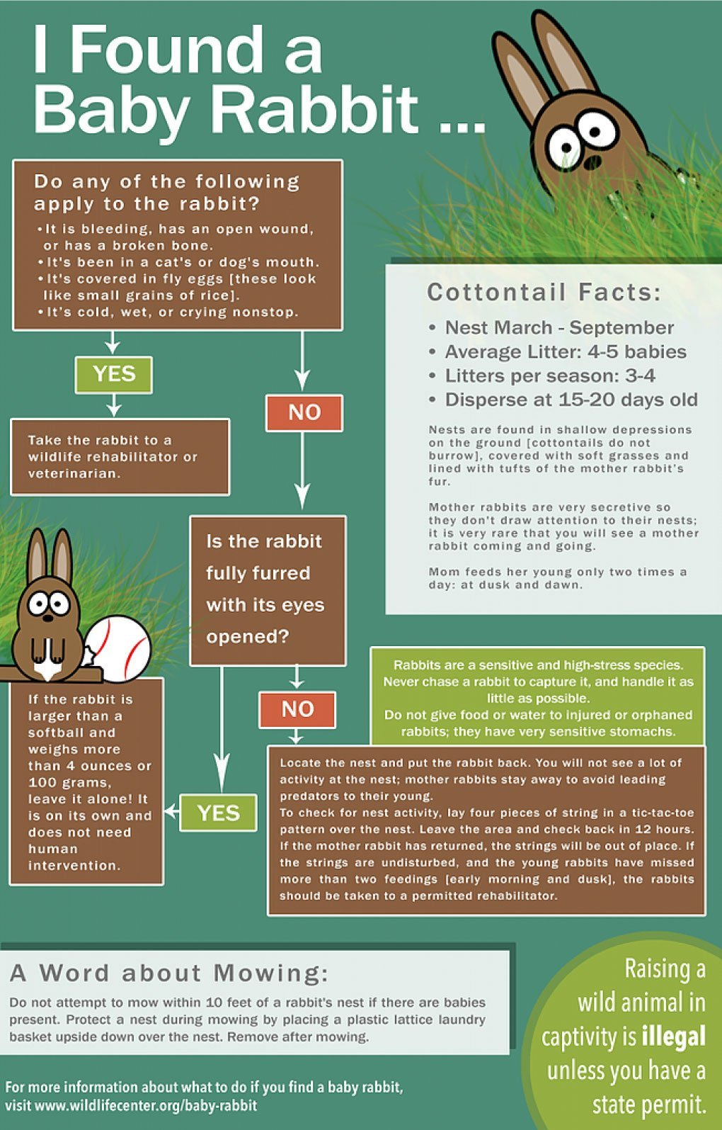 Baby Rabbit Infographic