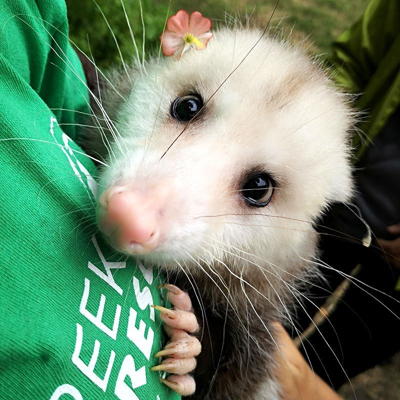 Stella the Oppossum