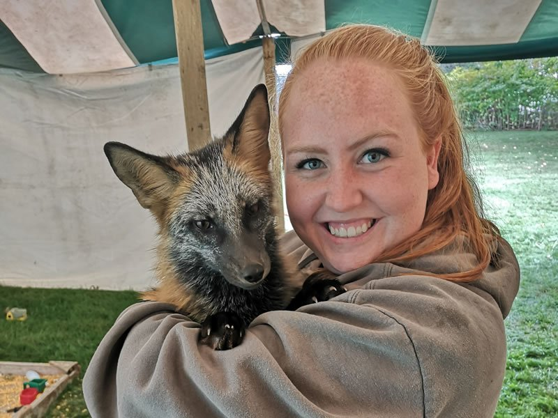 Wildlife Educator with Red Fox